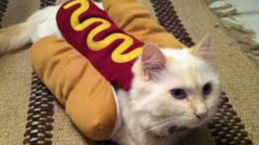 10-adorable-cats-in-costumes-that-will-brighten-up-your-day-1