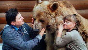 pet-bear-stepan