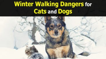 winter-walking-dangers-for-cats-and-dogs-1200x900